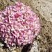Blütenpracht am Oberaarsee