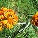 kräftig leuchtende Blumenfarben 2