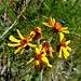 kräftig leuchtende Blumenfarben 1
