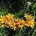 kräftig leuchtende Blumenfarben 3