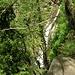 <br />Wenn wir diesen Wasserfall in der Orinoschlucht von oben sehen wollen,<br />müssen wir halt noch weiter hinauf, sorry, anders geht es nicht.....<br />_________________<br /><br />(Il Suono dell'Acqua)<br />[http://www.youtube.com/watch?v=ad4dYXYkrbc]<br />____________<br /><br />➹➹⬈⬀➶↗➚⬈➹➶⤤⤤⤤⤤⤤➹⬈⬀↗➚⇗⇗➚➚➚↗↗↗↗↗↗<br />________<br />______<br />____<br />__