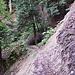 Eibenwald-Impression V. Hier ist die Hangerosion zu erkennen.