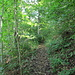 Im Wald unterhalb des Rest. Schartenfels.