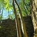 """<br />➽➼➸➻➺➵....ich schaute 'nach oben'.<br /><br />__________________<br /><br /><br />""""Siehst du"""", sagten die Bäume, <br />""""wir sind hier in nichts anderem <br />als in einer schlichten Ruine in Dongio,<br />im Valle di Blenio,<br />aber wir wachsen in den Himmel hinein.<br /><br />Ist doch genial, oder?<br /><br />Ist aber ganz einfach.<br />Das kannst du auch,<br />probier es nur einmal aus!""""<br /><br />""""Ich will aber nicht in den Himmel"""", sagte ich,<br />""""im Gegenteil, ich will zu den Heiden"""".<br /><br />""""Ach so, zu den Heiden willst du...!!!<br />Mhm...sehr gut, das ist auch nicht schlecht.<br />Das ist sogar sehr interessant.<br />Fast so interessant wie der Himmel.<br /><br />Ja dann wünschen wir dir einen schönen Tag.<br />Bis zum nächsten Mal, tschüss mong, mach's gut.""""<br /><br />_________________<br /><br /><br />Als ich weg ging, hörte ich, <br />wie der eine Baum zum anderen sagte:<br /><br />""""Unglaublich, hast du gehört, Kumpel,<br />er will nicht in den Himmel, er will zu den Heiden.<br />Haha - 'nicht in den Himmel, zu den Heiden'...!!!!<br /><br />Nei du, haha, das gibt's doch nicht...!!!<br />Das ist ja der Hammer...!!!<br />Aber eben, ich sage ja immer,<br />es gibt nichts, was es nicht gibt.<br /><br />Es ist schon sagenhaft, <br />was für komische Typen hier vorbei kommen, findest du nicht? <br /><br />Erinnerst du dich noch an den Anderen mit dem Strohhut,<br />das war vor ein paar Tagen...... (bla bla bla, etc. etc. etc.)""""<br />____________________________<br /><br /><br />Es wäre zwar spannend gewesen, <br />etwas über den """"Anderen mit dem Strohhut"""" zu erfahren, <br />aber ich war ungeduldig,<br />ich wollte endlich hinauf zu meinen Heiden,<br />und den Weg musste ich erst noch finden......<br />____________________<br /><br />(Conquest of Paradise - VANGELIS)<br />[http://www.youtube.com/watch?v=ocIn4GcyMa4]<br />__________<br /><br />➽➜➡➔➨➧➧☞☛☞☛☞☛➽➼➺➻➸➧➧➨➠➟➠➟➠⤻⤼⤻⤼↝⤳⟿⟿⇾<br />_______<br />______________<br />_______________________________<b"""