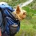 eine Marktlücke: Rucksack mit Hundefach