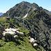 Der Gipfel ist nicht mehr so weit, wie es auf dem Foto aussieht.<br />Die Schafe nutzen bei der Hitze das kleinste Schattenplätzchen.