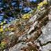 Blumen am Schoberstein