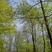 Die zarte Farbe des Frühlings II