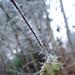 Kunstwerk aus Eis (Foto [U sglider])