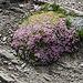 Farbtupfer in karger Steinlandschaft