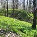 alte Burggräben und Mauerreste zerfurchen den Boden am Gipfelplateau des Sokol, den das Frühlingsgrün erobert