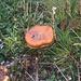 Sogar Pilze wachsen im unteren Teil vom Hasenstock Westgrat. Die genaue Art muss ich noch bestimmen... oder kennt jemand den Pilz?