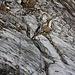 Foto von 2. Besteigungsversuch am 6.9.2011:<br /><br />Der Gletscher wir unterhalb der Felsbarriere ziemlich steil. Ohne Pickel und Steigeisen gibt's bei diesen Bedingungen kein Durchkommen!