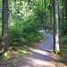 Der Panorama Single-Trail im Wald