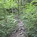 … immer wieder einzigartige «Märchenwälder»
