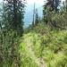 Der landschaftlich schöne, kleine Steig - hier kurz vor der Wegverzweigung unterhalb des Sätteles