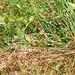 La coda di una vipera che ci ha attreversato il sentiero sulla via del ritorno ma, da vera vamp, non si è lasciata paparazzare facilmente