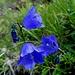 ... und mal formschön und intensiv blau