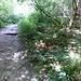 typischer Weg durch den Wald