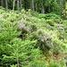 tolle Vegetation an den Hängen längs des Sees