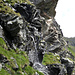 Quellwasser aus dem Felsen beim Abstieg Richtung Lej Languard