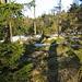 Morgensonne in den nachwachsenden Nadelwäldern des Isergebirge, die wie hier etwas von der Luftverschmutzung mitgenommen sind