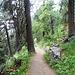 Bel sentiero in splendido bosco scendendo veloce a Pontresina
