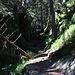 Kurz durch diesen Wald und ...