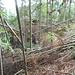 Es geht durch den Urwald aufwärts