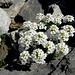ein liebliches Blumenbouquet