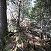 Auf dem Grat gibt es viel totes Holz, das vielen Insekten Nahrung und Wohnraum bietet.