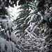 Auch auf den Bäumen hat der Neuschnee angesetzt.