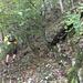 Im steilen Gelände suchten wir einen sicheren Aufstieg auf den Trauf.