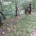 Kurz unterhalb des Traufs am Pfingstberg ist wieder ein Pfad zu erkennen