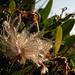 Blume im Morgenlicht I