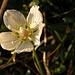 Blume im Morgenlicht II
