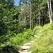 Schon auf dem Weg nach Westen Richtung Gamshütte.