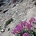 Etwas steiler geht's hoch zur Fuorcla Albana (2870m).