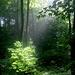 Morgens im Wald (Deister)
