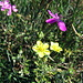 Eine Synphonie in gelb und violett