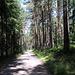 Weiterweg zurück zum Steinberger See, jetzt durch den Wald