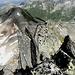 die Felsnadeln auf dem Grat erinnern an den Rütlischwur
