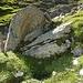 ... diesem Stein mit blauem Wegweiser. Am besten grad beim Stein über den Zaun steigen. An dieser Stelle kann man relativ gut den Hang auf der anderen Seite hochsteigen.