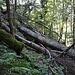 Schon auf dem guten Weg, hier nur von umgestürzten Bäumen bedeckt.