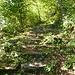 Uralte Steintreppen am alten Alpweg von Iragna ins Val d'Iragna