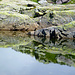 Fels und Wasser