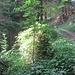 Der bekannte Baumstrunk - immer wieder interessant wie er sich wandelt mit den Jahreszeiten.