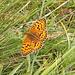 Ancora farfalle...