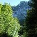 Von der Forstrasse im Hauergraben blicken wir hinauf zum Grat, wo wir duchgewandert sind