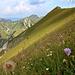 Blumenreiche Flanke an der Schreckenspitze